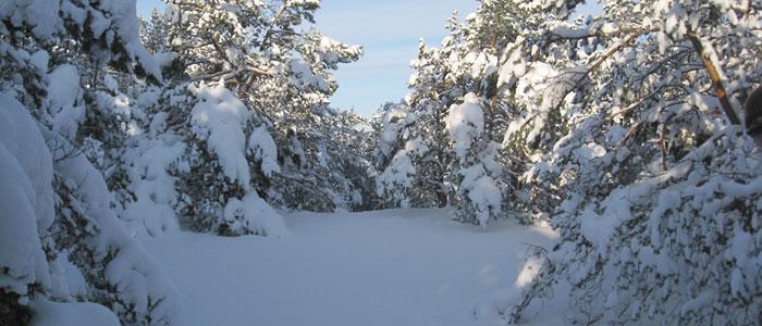 """09.01.2010 Ārā nežēlīgi mīnusi, toties spīd saule. Dodamies """"ziemas pasakas"""" pastaigā uz Lilasti. Maršruts no Lilastes […]"""