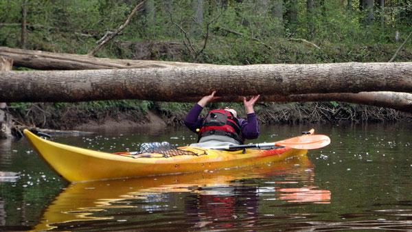 Pienācisilgi gaidītais pavasaris. Visi laivotāji laipni aicināti! Apkalpojam Kurzemes upes arī, ja esat tikai dažas laivas. […]